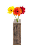 Daisy flowers in test tubes. Gerbera daisy flowers in test tubes isolated on white background Stock Photo