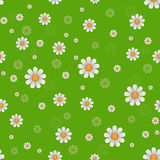 Daisy flowers texture. Vector Royalty Free Stock Images
