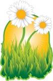 Daisy Flowers in Tuin Royalty-vrije Illustratie