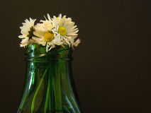 Daisy flowers in vase Royalty Free Stock Image