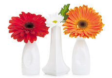 Daisy flowers in vase stock photo