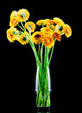 Orange Daisy Flowers In A Glass Vase Royalty Free Stock ...