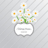 Daisy flowers and vintage label card. Card design with daisy flowers and vintage label. Vector illustration Royalty Free Stock Photo
