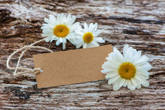 Daisy flowers with a vintage tag Stock Images