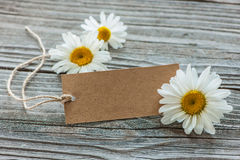 Daisy flowers with a vintage tag Stock Image