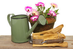 Daisy flowers and watering can Stock Images
