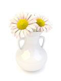 Daisy flowers in a white porcelyn vase Stock Images