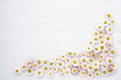 Daisy flowers on white wooden background. Copy space, top view. Holiday background. Birthday, Mothers Day concept Royalty Free Stock Photography