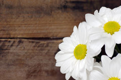 Daisy flowers on wood Stock Image