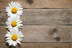 Daisy flowers on wood Stock Photography