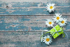 Daisy flowers on wooden background Stock Image
