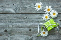 Daisy flowers on wooden background Royalty Free Stock Photos