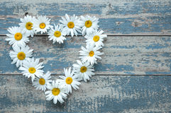 Daisy flowers on wooden background Royalty Free Stock Photo