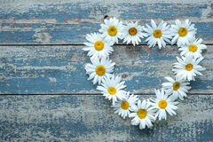 Daisy flowers on wooden background Stock Photos