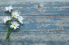 Daisy flowers on wooden background Royalty Free Stock Images