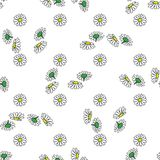 Daisy hand drawn pattern on white background . Vector illustration. Daisy flowers yellow and green hand drawn seamless pattern on white background . Vector Royalty Free Stock Images