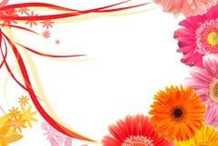 Daisy frame Royalty Free Stock Photography