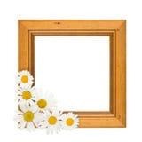 Daisy Frame Royalty Free Stock Photo