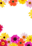 Daisy frame. Frame made of colorful daisies isolated on white stock image