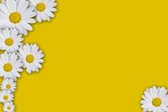 Daisy frame Stock Image