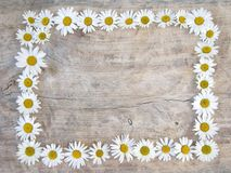 Daisy frame. On wooden background Royalty Free Stock Photos