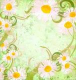 Daisy frame grunge background vintage style Stock Photo