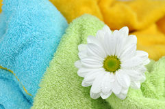 Daisy and Fresh Towels Stock Image