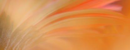 daisy gerbera abstrakcyjne Zdjęcie Royalty Free