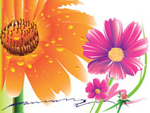 Daisy gerbera flower. This daisy flower ideas for creative graphic shapes. Colors and stripes. Graphic design is a natural color made from the stock illustration
