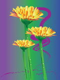 Daisy gerbera flower. This daisy flower ideas for creative graphic shapes. Colors and stripes. Graphic design is a natural color made from the royalty free illustration