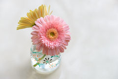 daisy-gerbera in glass vase Royalty Free Stock Photo