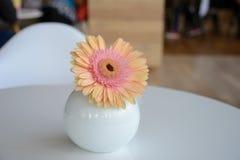 Daisy-gerbera in vase Royalty Free Stock Photography