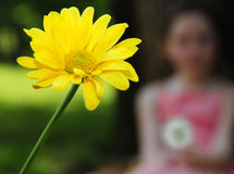 Daisy and Girl Royalty Free Stock Photos