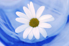 Daisy In A Glass Royalty Free Stock Photos