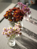 Daisy in glass bottles Stock Photography