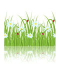 Daisy grass Royalty Free Stock Photo