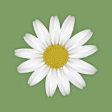 Daisy on green Royalty Free Stock Photos