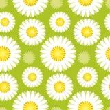 Daisy green pattern Stock Photo