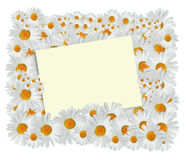 Daisy Greeting Card Royalty Free Stock Photos
