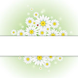 Daisy greeting card. Can used as wallpaper. Vector is in CMYK color mode Royalty Free Stock Photo