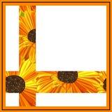 Daisy greeting card. Royalty Free Stock Photo