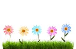 Daisy in groen gras Stock Afbeelding