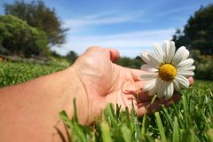 Daisy Hand Royalty-vrije Stock Foto's