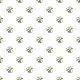 Daisy hand drawn pattern on white background . Vector illustration. Daisy flowers yellow and green hand drawn seamless pattern on white background . Vector Royalty Free Stock Image