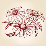 Daisy hand drawn vector llustration sketch Stock Photography