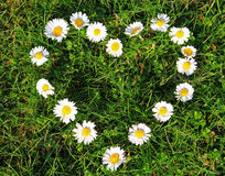 Daisy heart. Daisy flowers in heart shape on the grass Stock Images