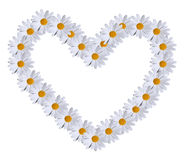 Daisy heart Stock Image