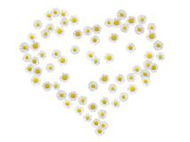 Daisy heart 2. A heart made of daisies Royalty Free Stock Images