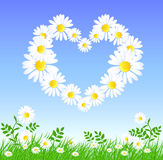 Daisy heart Royalty Free Stock Images