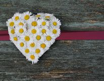 Daisy Heart Fotografia de Stock Royalty Free
